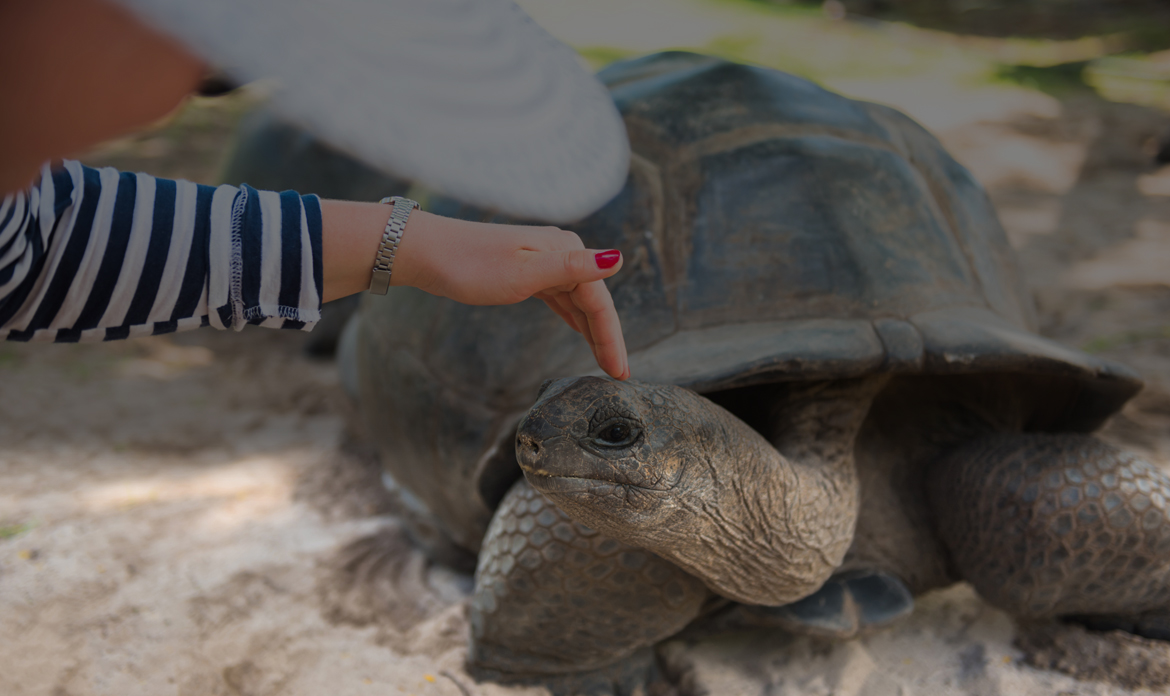 Amazing Presence of Marine and Wild Life.. including the Giant Tortoise